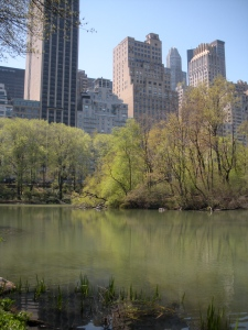 Central Park, you're pretty