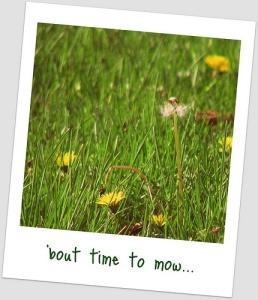 mowing weeds