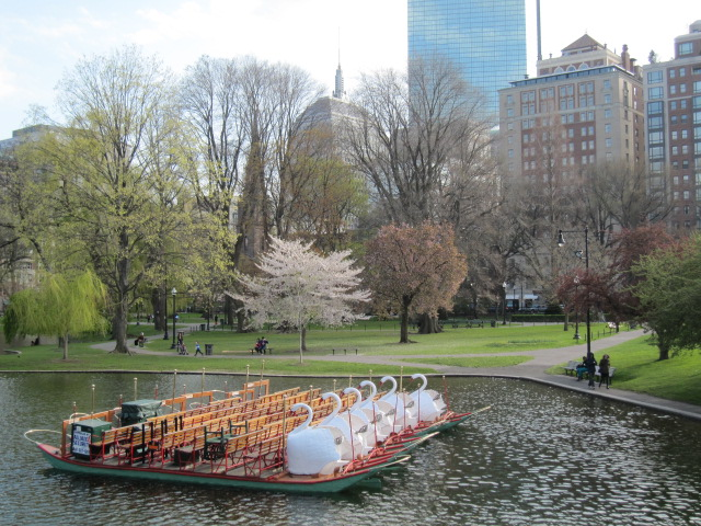Boston swan boats scene