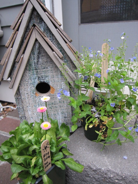 birdhouse and plants