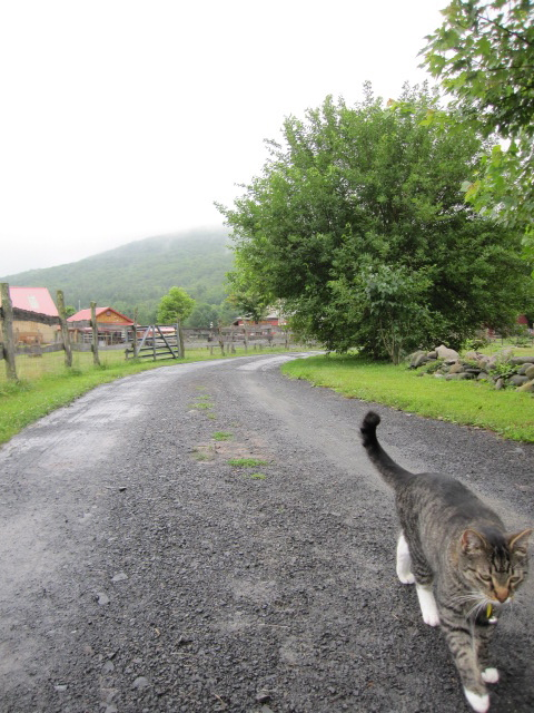Cat greeter at sanctuary