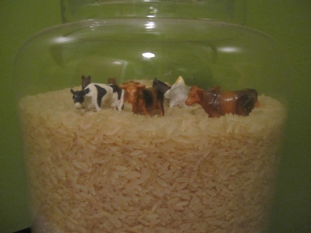 toy farm animals in rice