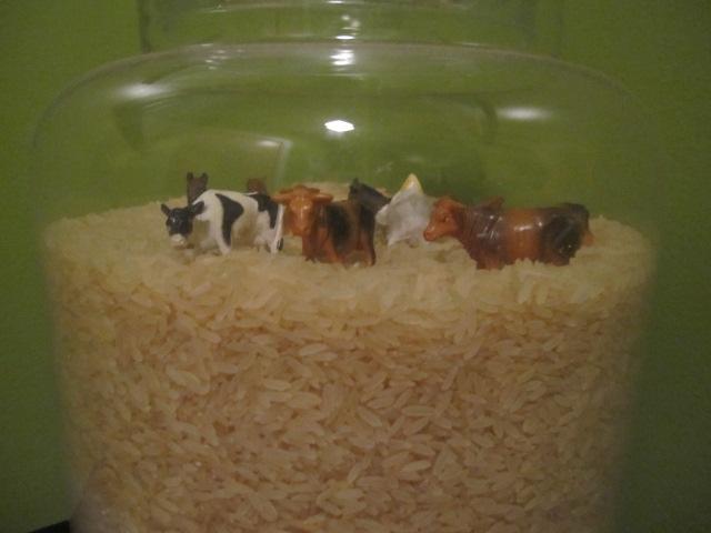 toy farm animals in rice